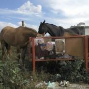 Animales sueltos – Problema de nunca acabar